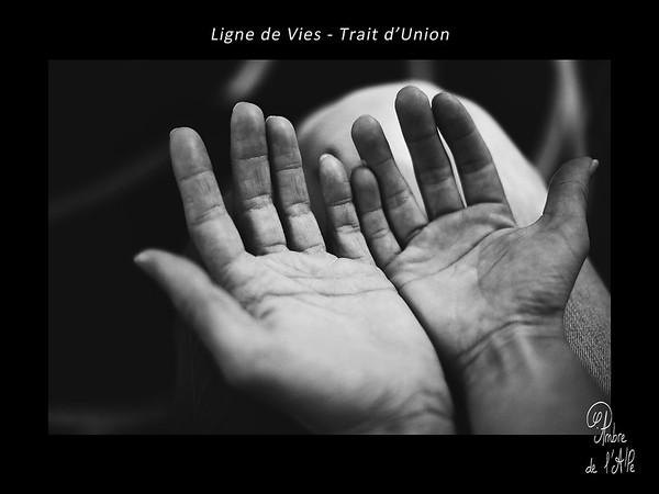 Ligne de Vies - Trait d'Union
