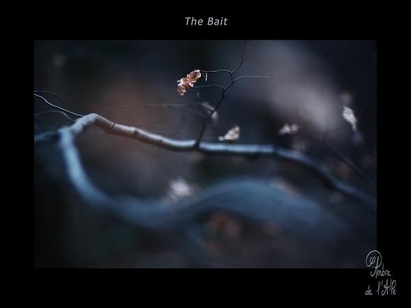 The Bait • L'Appât