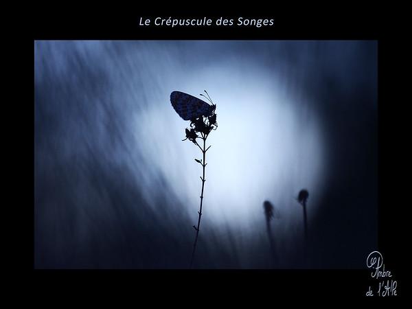 Le Crépuscule des Songes