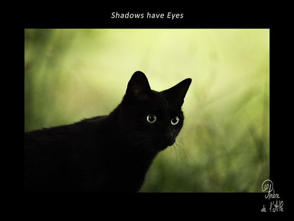 Shadows have Eyes
