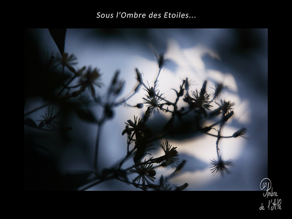 Sous l'Ombre des Etoiles...