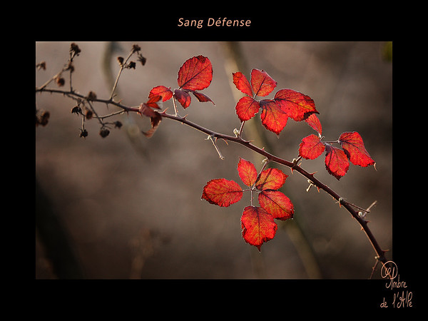 Sang, Défenses