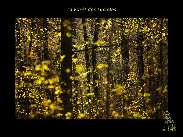La Forêt des Lucioles