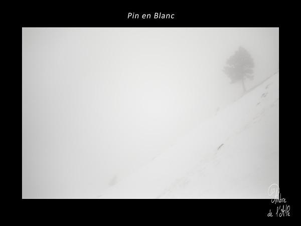 Pin en Blanc