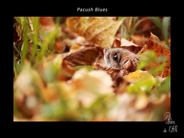 Pacush Blues