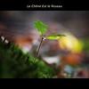 Le Chêne Est le Roseau