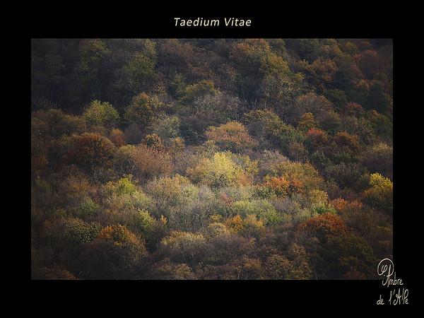 Taedium vitae