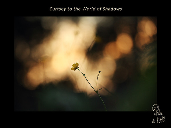 Curtsey to the World of Shadows