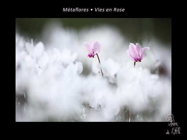 Métaflores • Vies en Rose