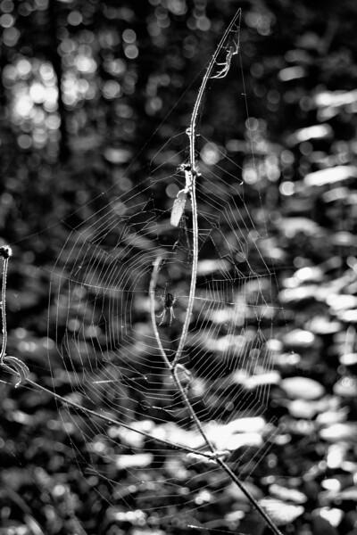 deux araignées | two spiders