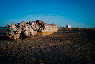 Massive dead wood piece resting on the beach of Salin de Giraud.