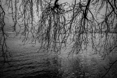 Tree branches almost touching water in Cham, Switzerland
