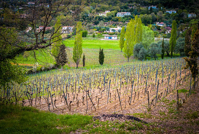Vignoble de Saint-Jeannet, Saint-Jeannet Vineyard