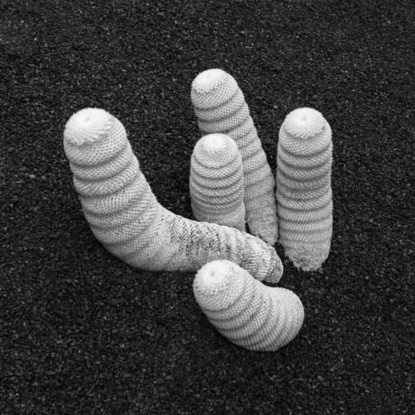 """<p><font size=""""4"""">Les animaux du désert </font></p> <p><font size=""""1"""">Desert animals</font></p>"""