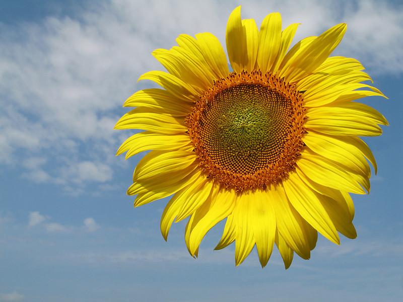 """<p><font size=""""4"""">La mutation du soleil </font></p> <p><font size=""""1"""">The sun's mutation</font></p>"""