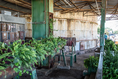 Greens and rust