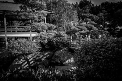 Vegetation in Japanese Garden, Monaco, French Riviera, Côte d'azur