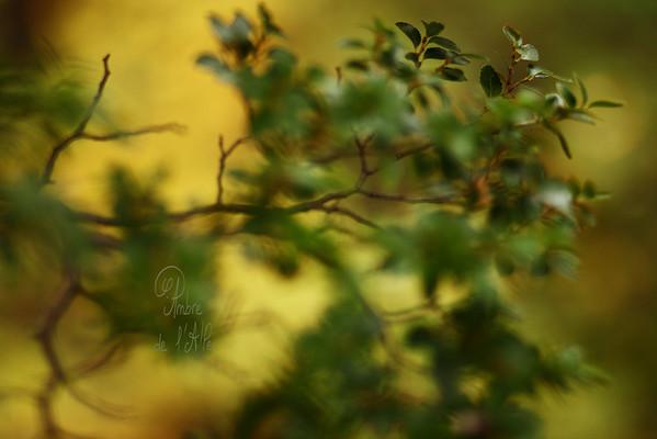 The Forest of Lights,<br /> Autumn Leaves<br /> <br /> Tableaux abscons des magnifiques forêts Patagoniennes...<br /> <br /> Copyright : Ambre de l'AlPe