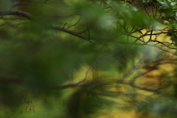 """""""La Forêt des Lumières"""""""