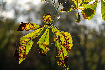 l'automne | fall