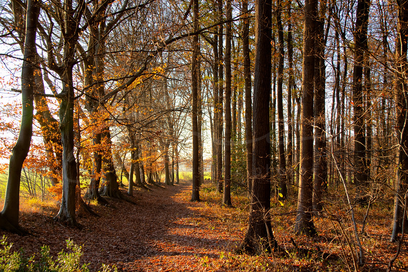 the golden light of november