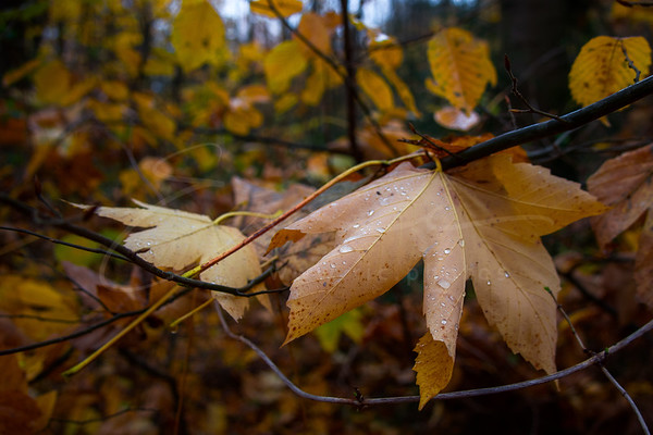 at november in the forest
