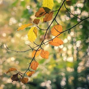 l'automne est arrivé   fall is here