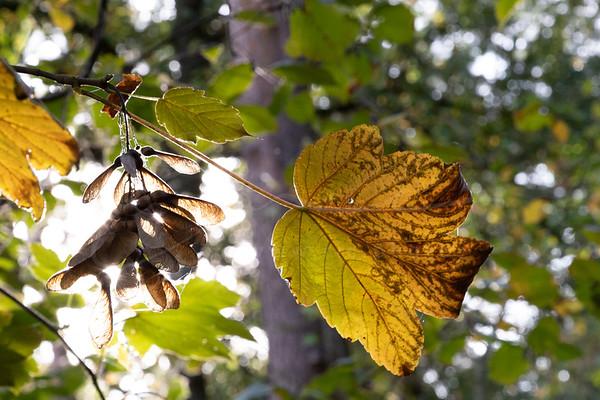 les couleurs d'automne | colors of autumn