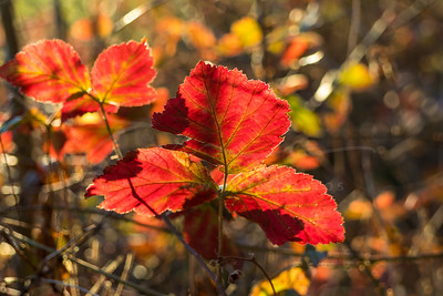 fall | automne | Herbst