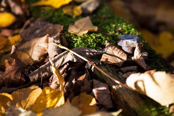 les feuilles et la vis rouillée