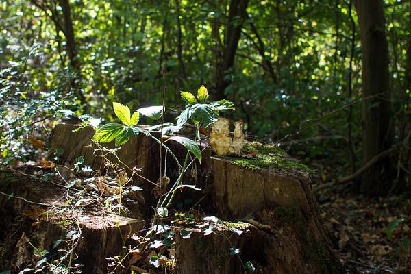 the golden september in the forest