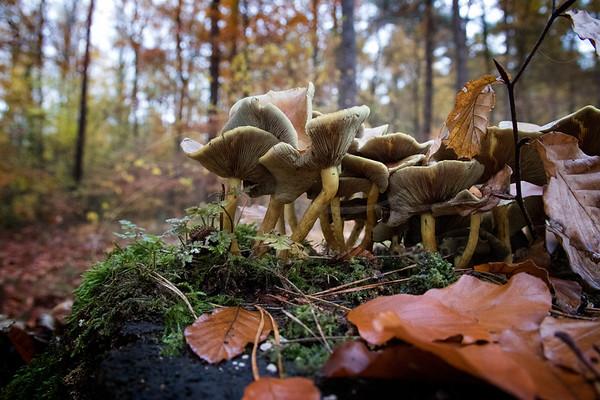 les champignons sauvages