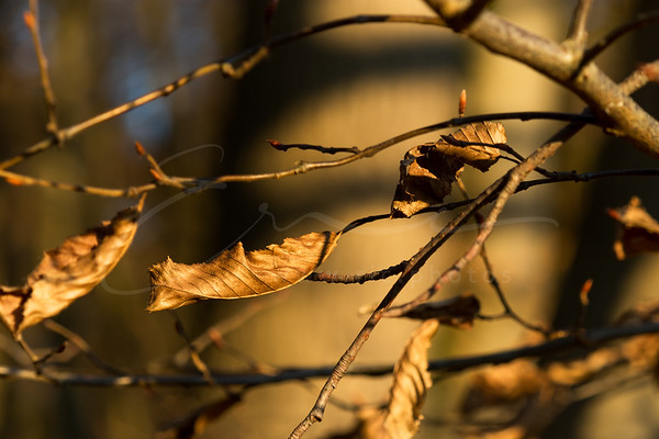 the golden light of november