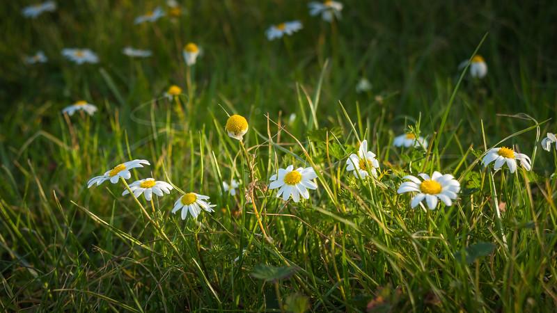 le printemps est proche | spring is coming