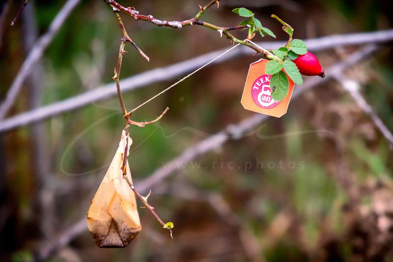 l'arbre à sachets de thé | tea bag tree