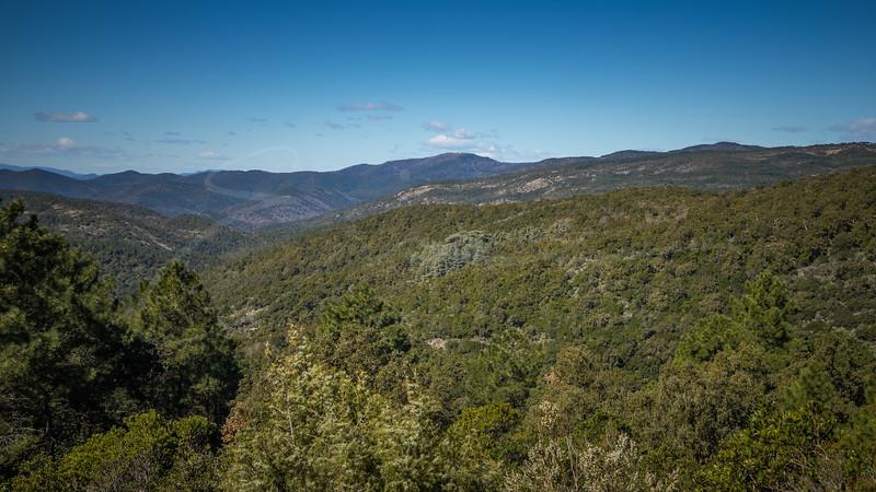 Forêt de cèdres à coté de la Chartreuse de la Verne