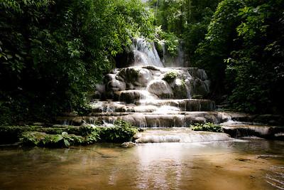 Forêt Tropicale. Palenque. Mexique.
