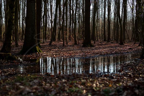 L'éveil de la nature | the awakening of nature