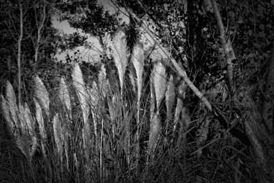 les herbes au soleil | the grasses in the sun