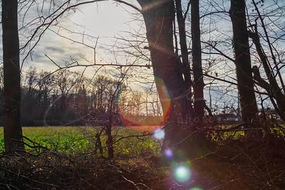 le soleil d'hiver | winter sun