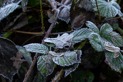 le givre après une nuit froide | hoarfrost after a cold night