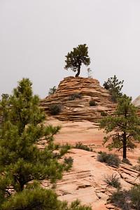 Tree on rocks