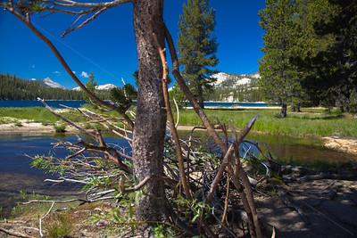 Sunny day in Yosemite