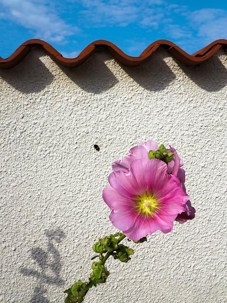 """<p><font size=""""4"""">Rêve causé par la disparition de l'abeille</font></p> <p><font size=""""1"""">Dream caused by the disappearance of the bee</font></p>"""