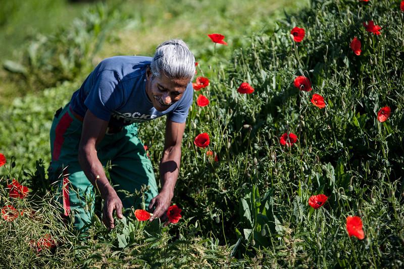 FRANÇOIS RAMESVADANANE DU SRI LANKA : François Ramesvadanane, en vies La vie de François Ramesvadanane est comme une succession de miracles. Lui qui a traversé l'Asie et l'Europe dans une incroyable épopée a fini par arriver ici dans ce jardin merveilleux des Deux Rives. Il aime vivre auprès des plantes, des arbres, des saules qu'il taille en ce début de printemps 2012. Il aime cette nature vivante, faire connaître et partager les fruits et légumes de sa culture tamoule avec ses collègues; philosopher avec Guy, son chef d'équipe, sur cette nature et cet humanisme profond qui les unissent.