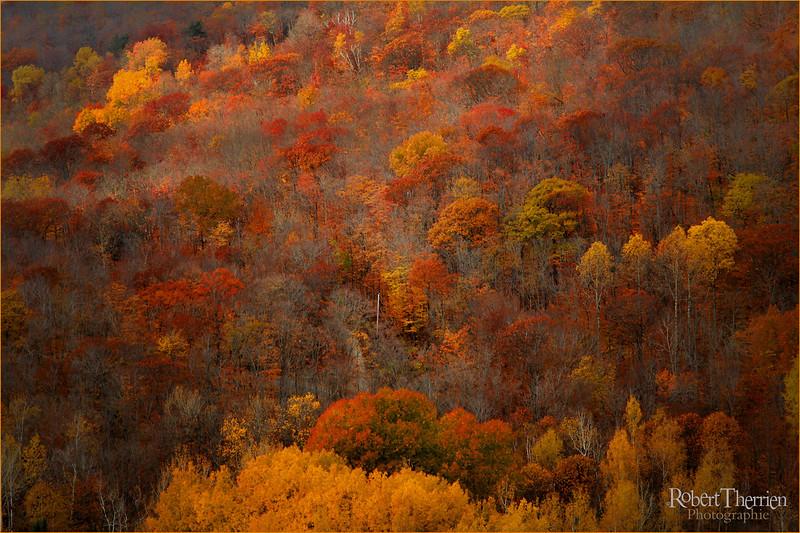 Paysage d'automne , Vallée du Parc,