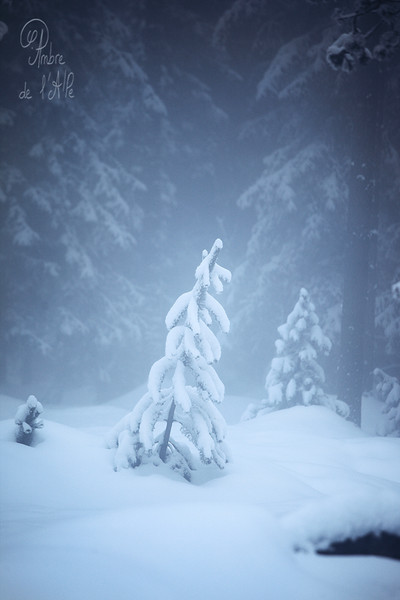 Frozen. Heart of Ice.