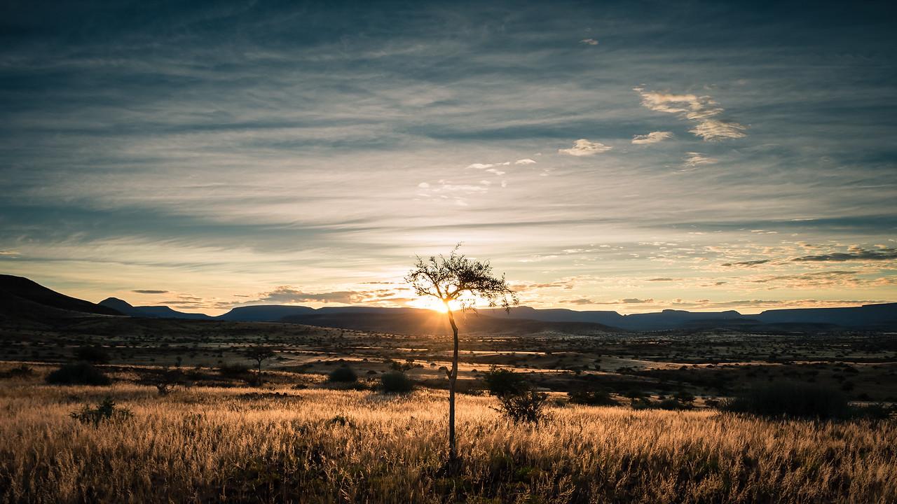 Tree of life #2