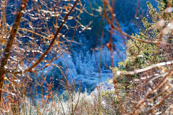 les arbres givrés aux Gorges du Verdon