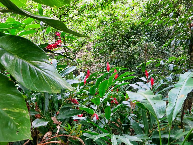 les fleurs des Antilles